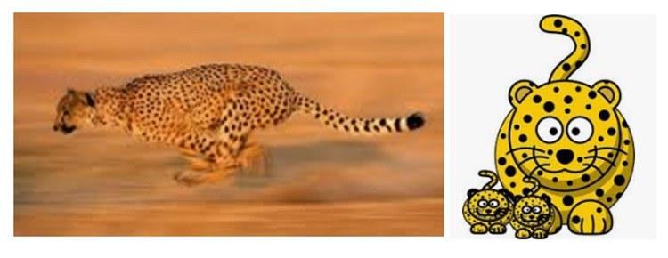 Cheetah toys