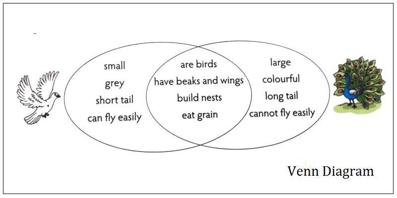 Venn Diagram For Kids